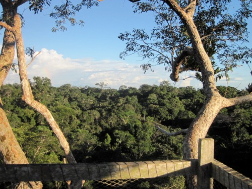 Above the rainforest canopy