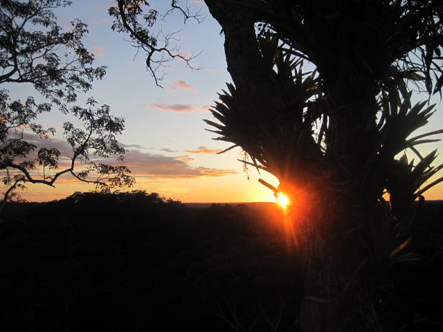 Sun behind the Epiphytes photo credit:  A.Vooris, 2015