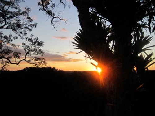 Sun behind the Epiphytes  above the amazon rainforest canopy